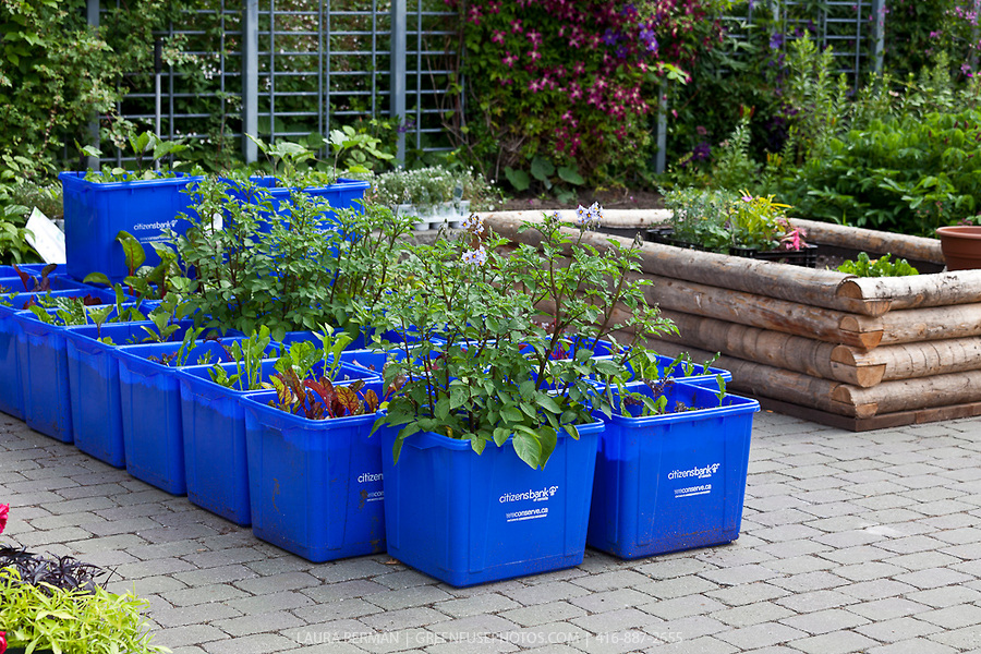 Patio Gardening Containers