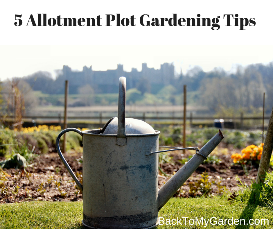 5 allotment plot gardening tips back to my garden for Gardening tips