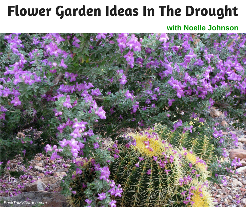 Flower garden ideas in the drought with noelle johnson for Garden design podcast