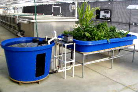 Outdoor indoor home aquaponics for beginners free for Can you use distilled water for betta fish